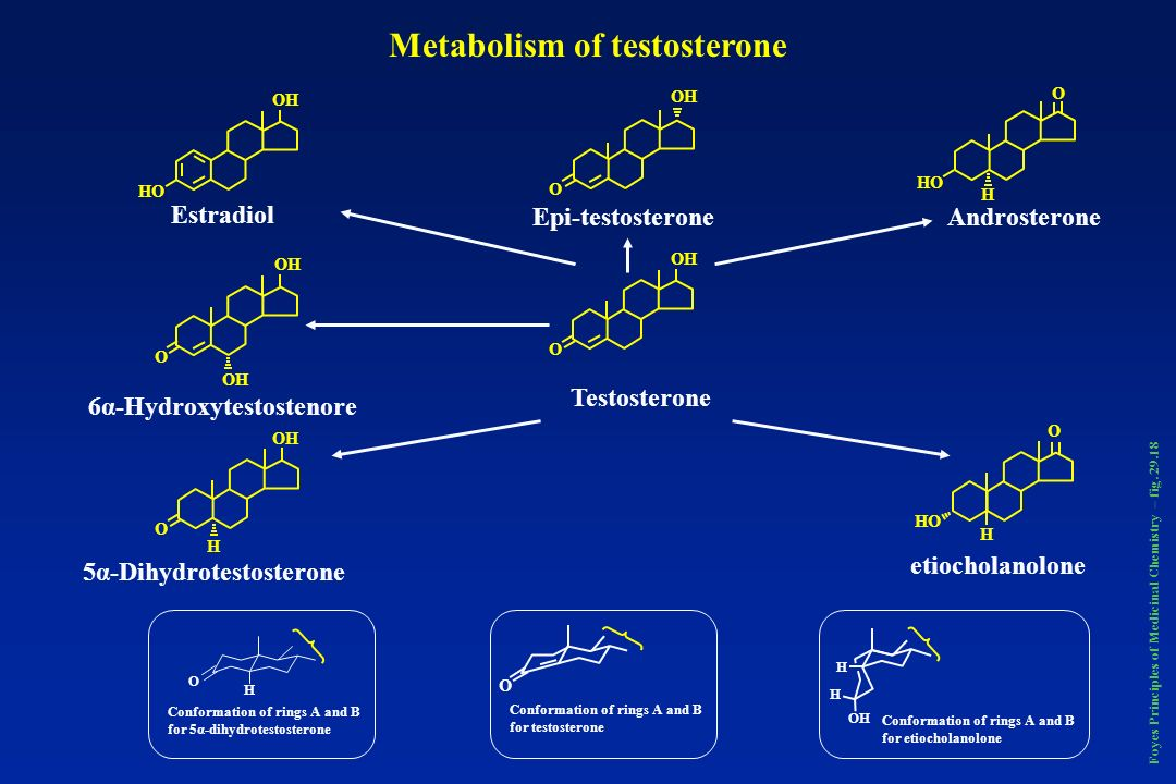 Metabolism of testosterone