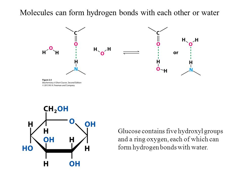 How many hydrogen bonds are attached to each water ...