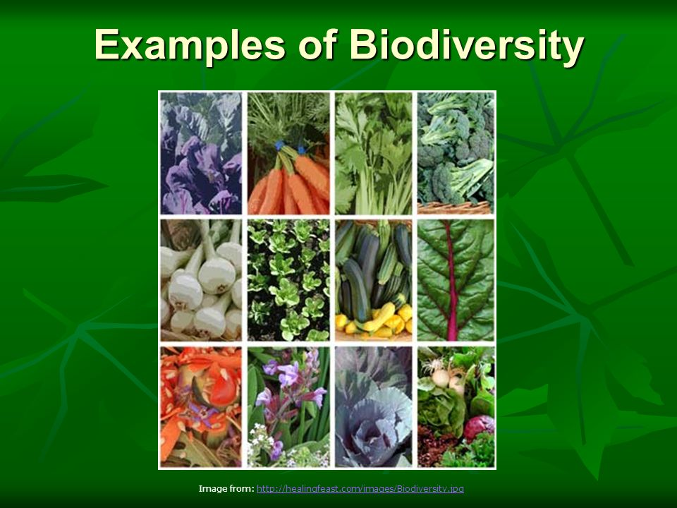 an introduction to the importance of biodiversity on earth The word biodiversity is used to explain the variety of life on earth, and is  considered at  the importance of biodiversity was one of the key subjects of the  1992 world summit  introductions into freshwater systems (mea 2005) (figure  7.