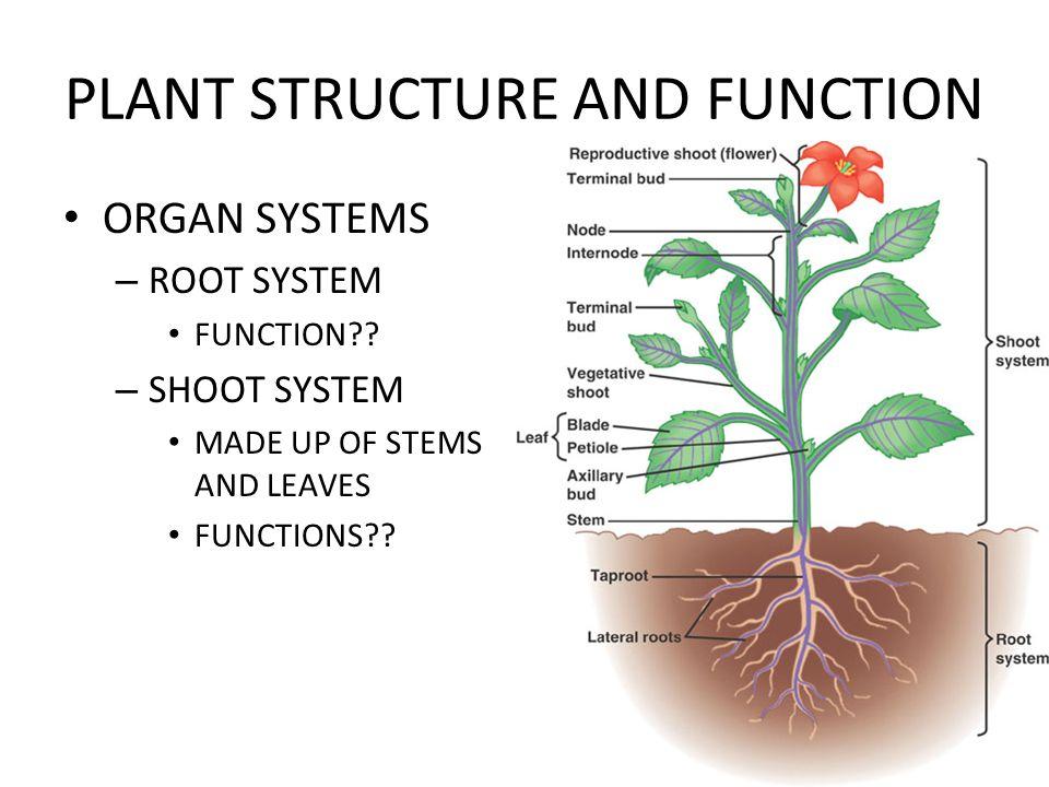 Großzügig Plant Structure And Anatomy Galerie - Menschliche Anatomie ...