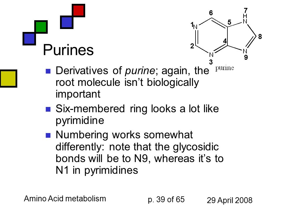 Amino Acid Catabolism Nucleic Acid Chemistry Ppt Download