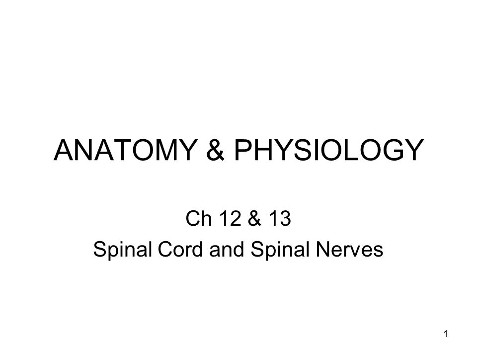 Ch 12 & 13 Spinal Cord and Spinal Nerves - ppt video online download
