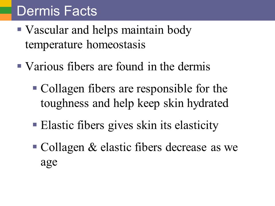 Skin and Body Membranes - ppt download