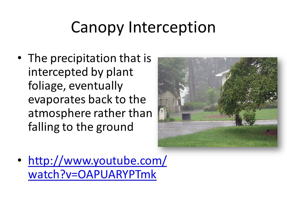 Canopy Interception  sc 1 st  SlidePlayer & Water Cycle beyond evaporation condensation precipitation - ppt ...
