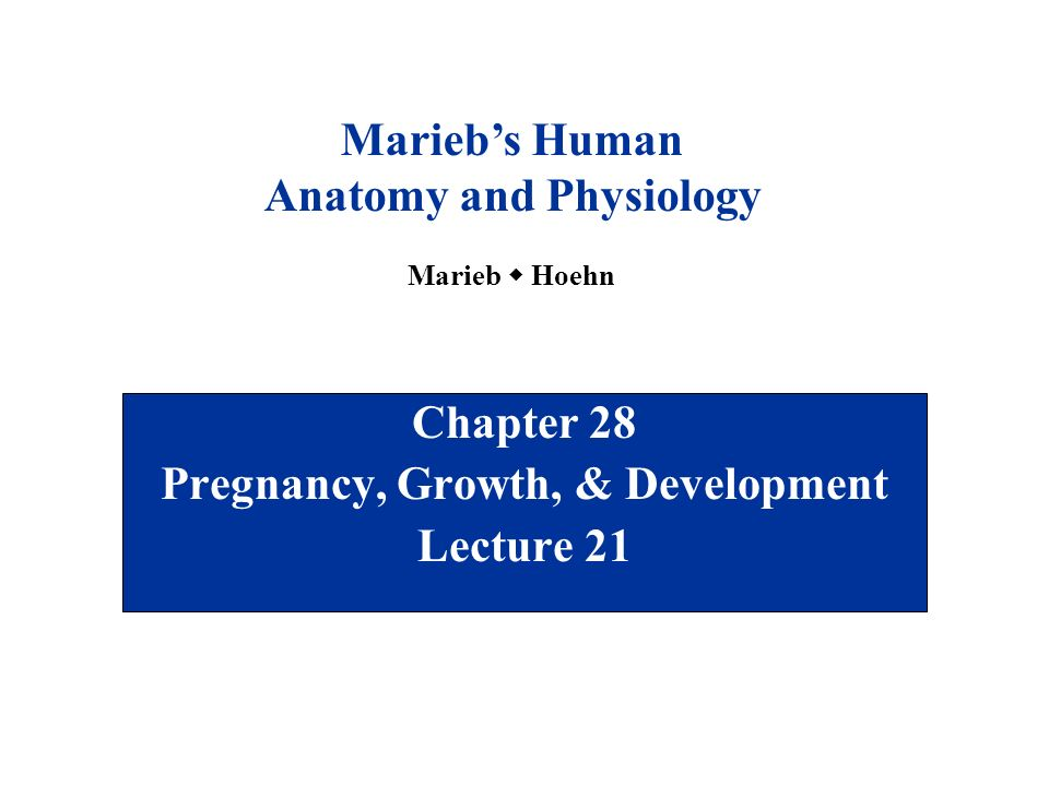 Anatomy And Physiology Pregnancy Growth And Development – Dibujos