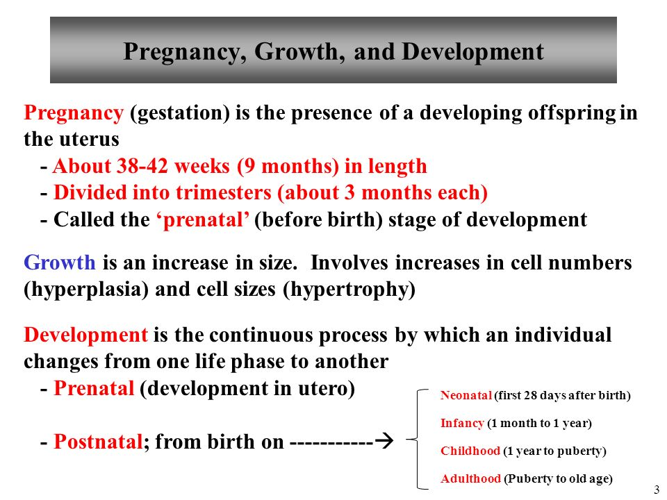 stages of growth and development from infancy to adulthood pdf