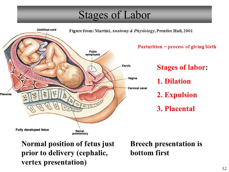 Anatomy Of Embryo Gallery - human body anatomy