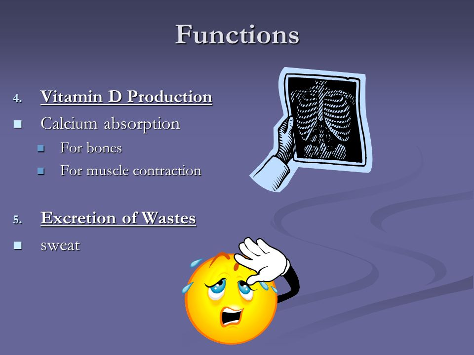 Functions Vitamin D Production Calcium absorption Excretion of Wastes