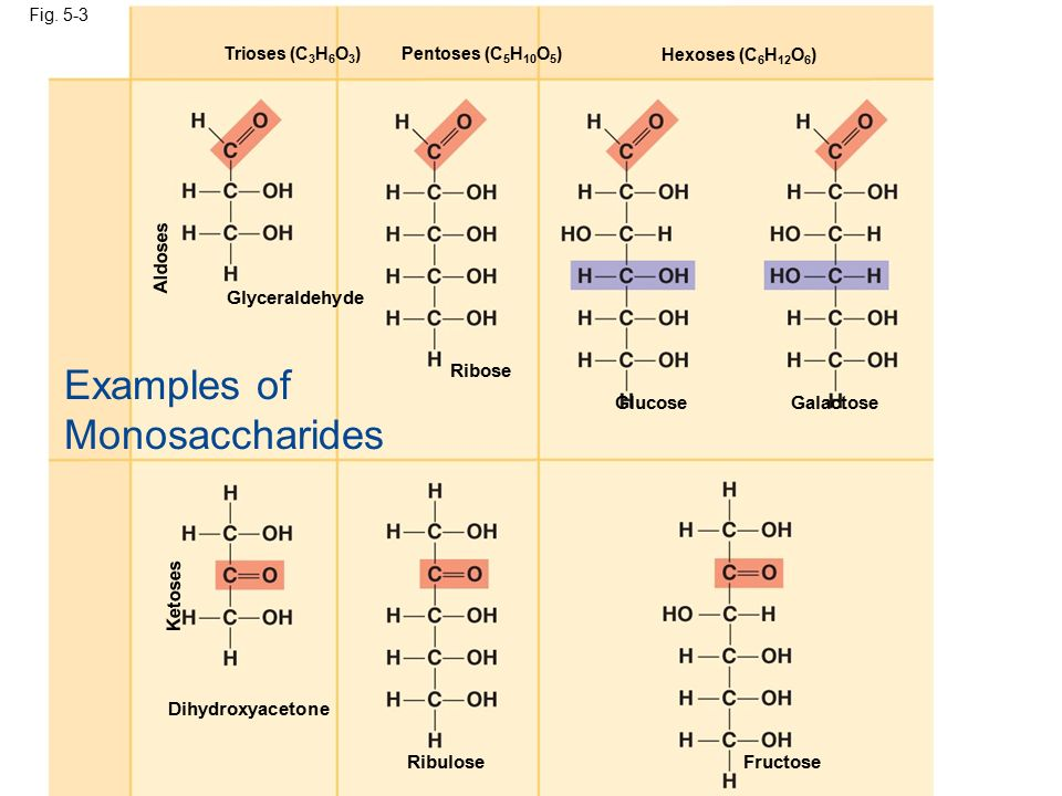 Examples Of Monosaccharides Choice Image Example Cover Letter For