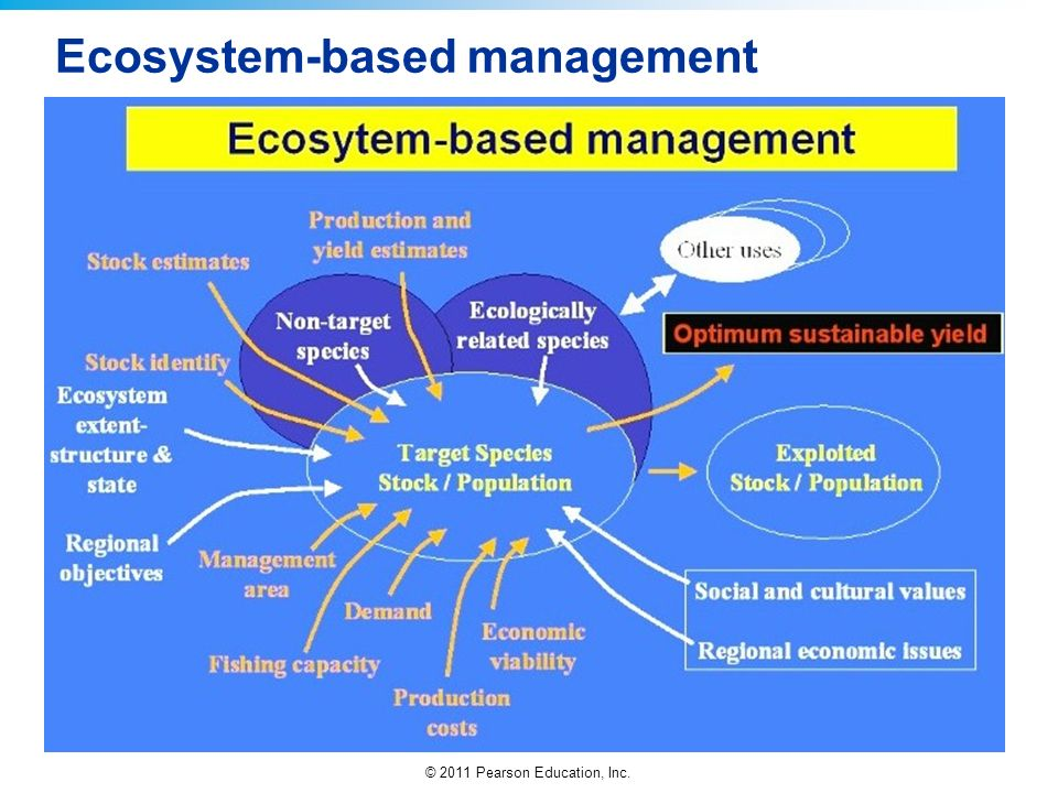 an essay on ecosystem management Such as developing effective vaccination strategies, managing fisheries without   organisms in ecosystems are connected in complex relationships, it is not.