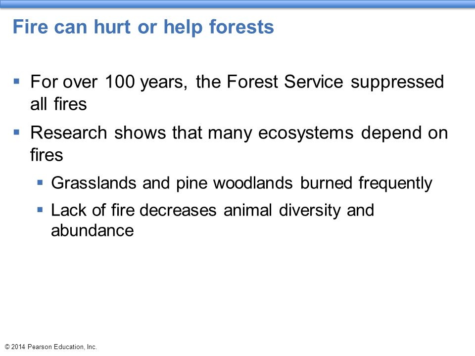 forest fire help or harm essay Cleaning the forest floor fire removes low-growing flames can help prevent large damaging wildfires that spread out of wwwfirecagov benefits of fire.