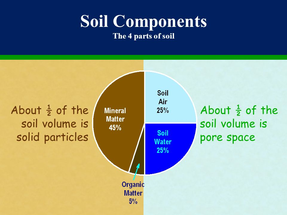 Mikroorganisme bahan organik tanah ppt video online for Four main components of soil