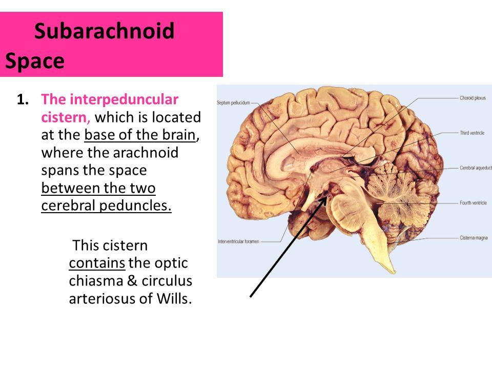 Subarachnoid Space  an overview  ScienceDirect Topics