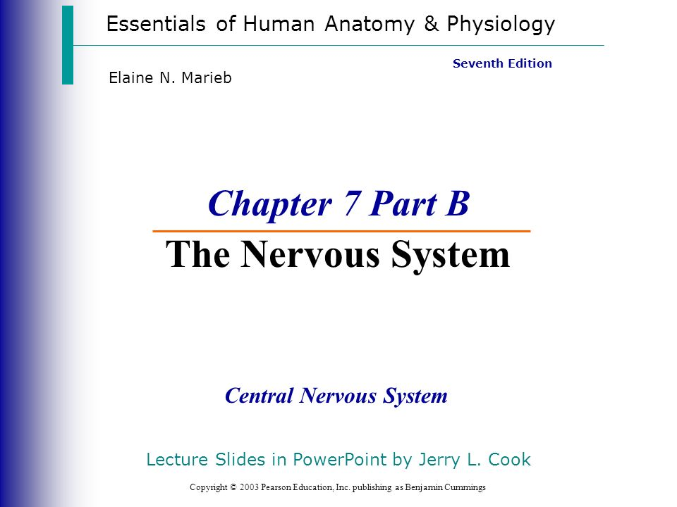 Chapter 7 Part B The Nervous System Ppt Video Online Download