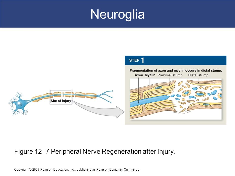 an introduction to the analysis of neurological regeneration The goal of much effort in recent years has been to provide a simplified interpretation of the electroencephalogram (eeg) for a variety of applications, including the diagnosis of neurological an introduction to bispectral analysis for the electroencephalogram | springerlink.
