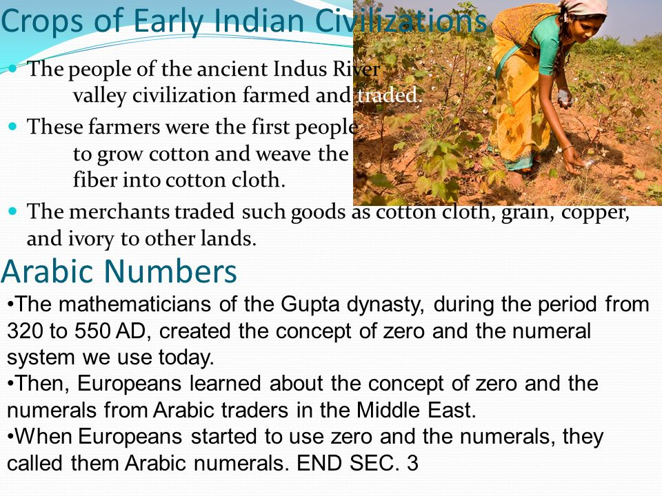 Crops of Early Indian Civilizations
