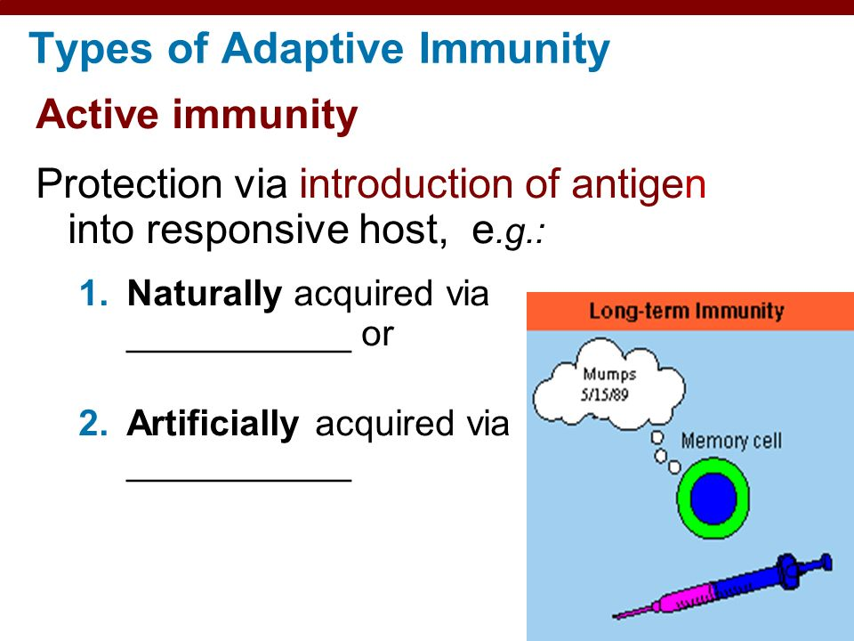 17 Adaptive Immunity Specific Defenses Of The Host Ppt