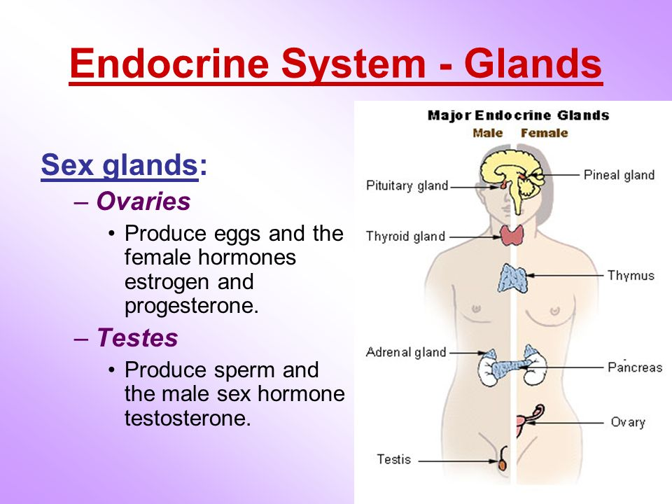effects of endocrine glands n human behaviour Human behavior is governed by two interdependent systems: the nervous system and the endocrine system clinical neuropsychology and neuropsychological re-search have.
