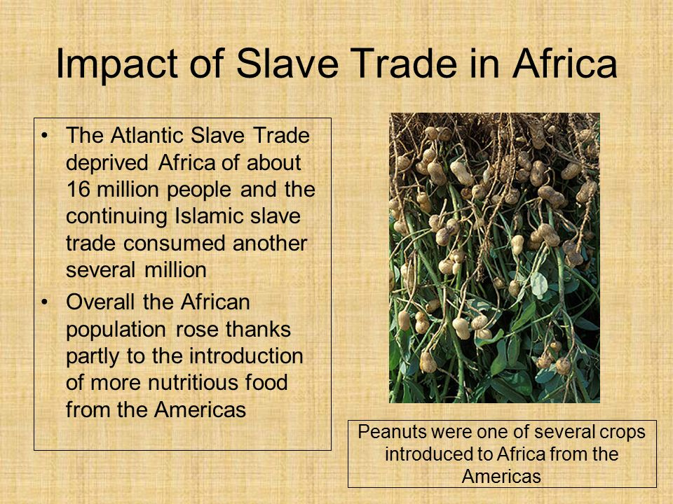 The african slave trade ppt video online download for African crops and slave cuisine