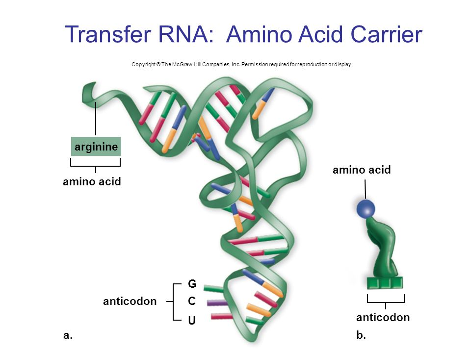 dna and rna c c Dna and rna both carry genetic information, but there are differences between them this is a comparison of the differences between dna versus rna.