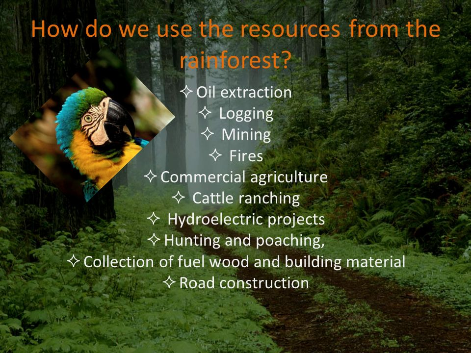 Deforestation And Tropical Rainforests Ppt Video Online