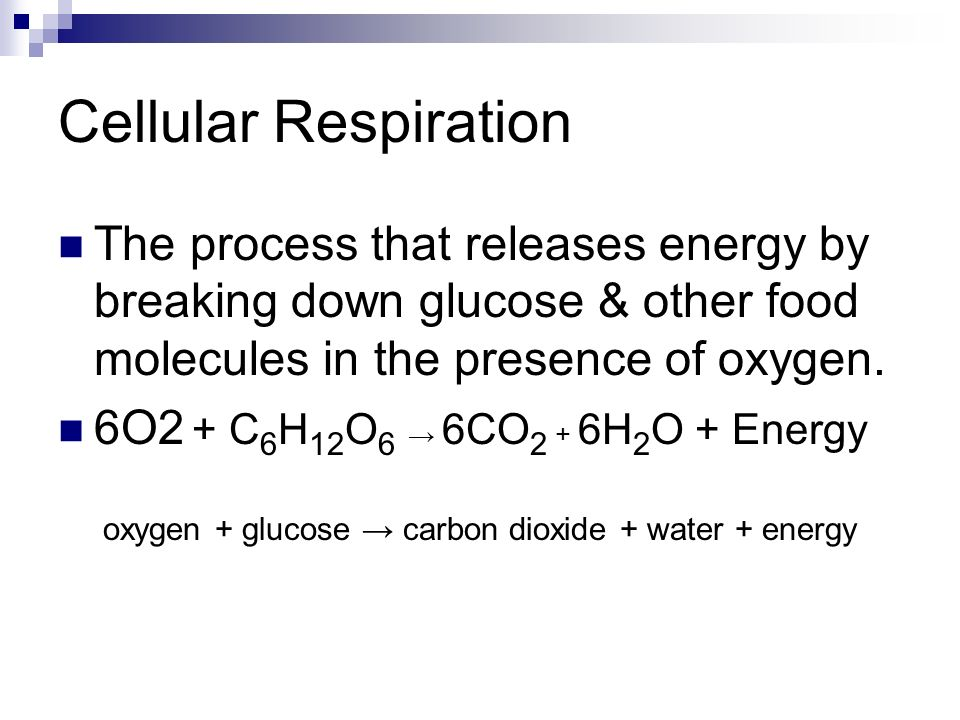 Cellular Respiration Breaking Down Energy Worksheet Energy Etfs