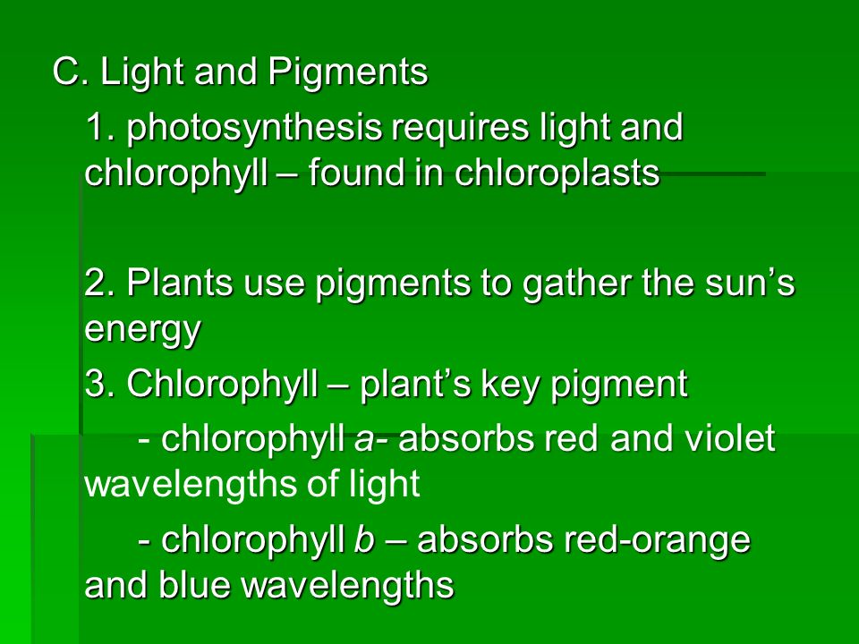 plant pigments and phtosynthesis
