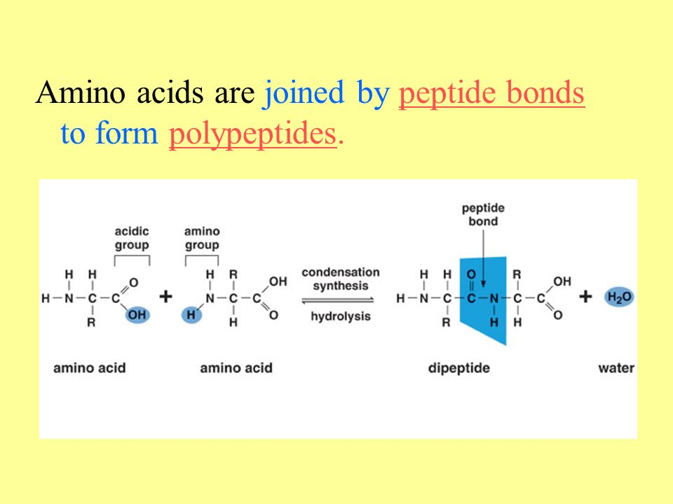 Chapter 2: The Molecules of Cells - ppt download