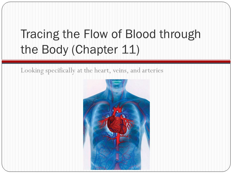 Chapters 10 & 11 Blood and Cardiovascular System - ppt download