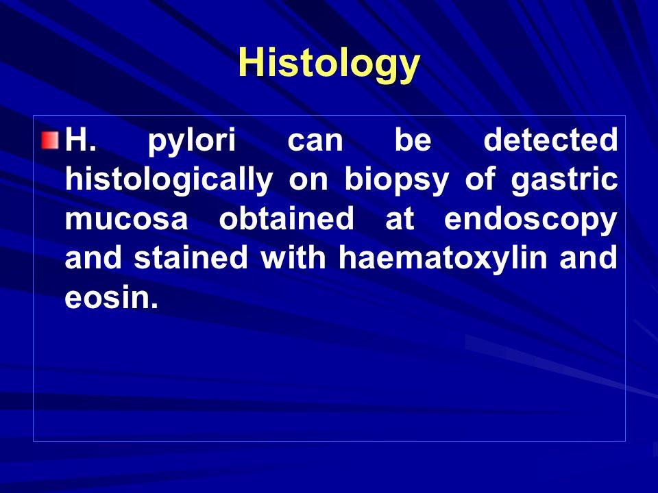 Histology H.