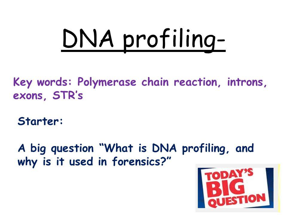 dna profiling key words polymerase chain reaction introns exons