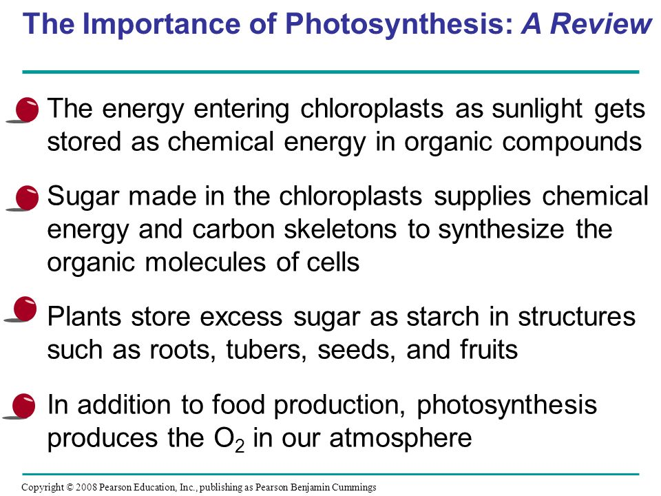 importance of photosynthesis to humans Benefits of photosynthesis july 14, 2011  benefits skin cancer and ageing are examples of some of the numerous detrimental light effects on both animals and humans.