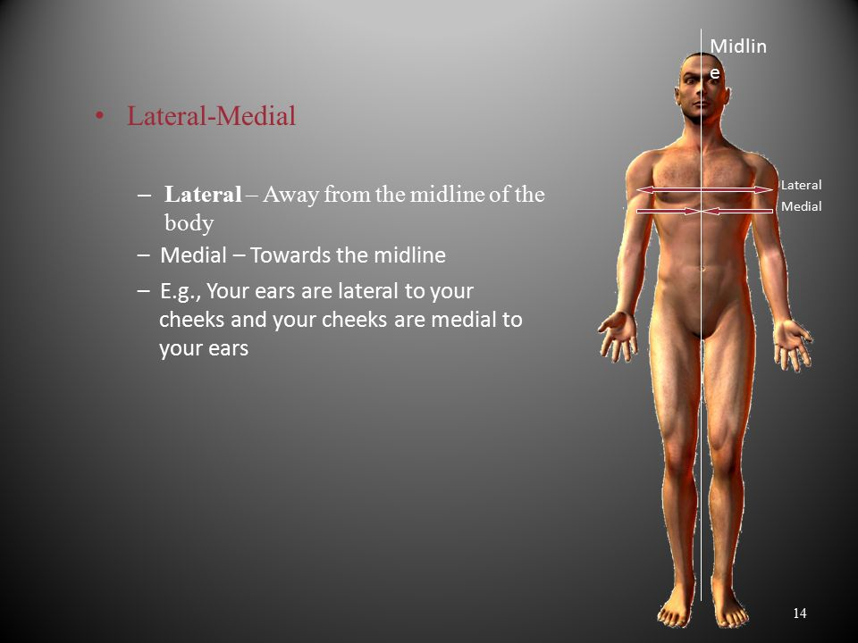 Lateral-Medial Lateral – Away from the midline of the body