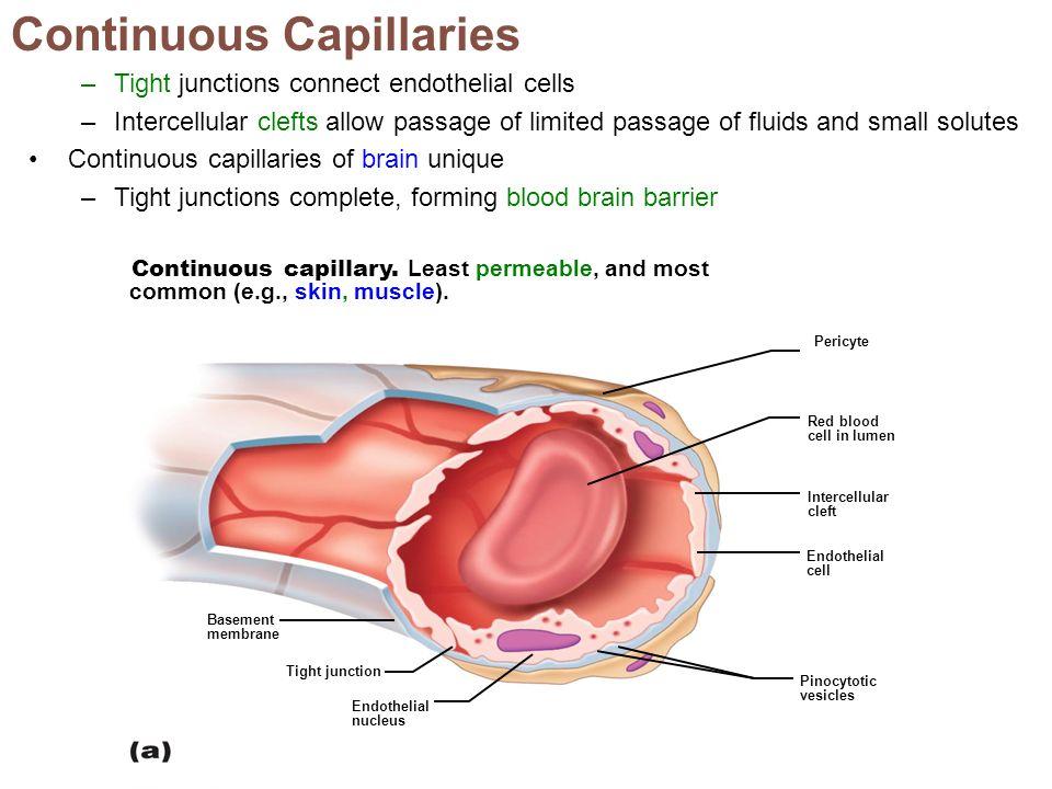 Continuous Capillaries