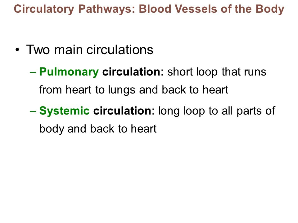 Circulatory Pathways: Blood Vessels of the Body