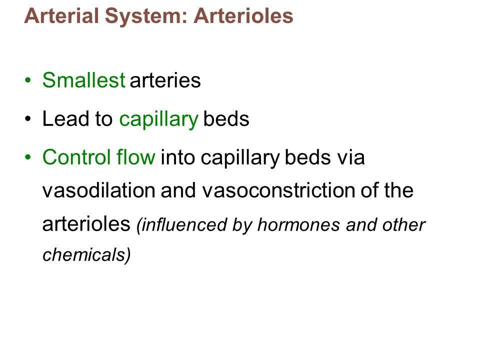 Arterial System: Arterioles
