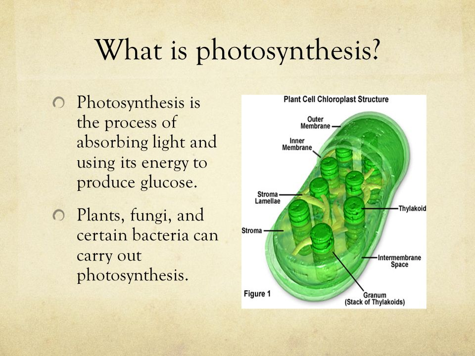 photosythesis light Lesson objectives outline the stages of photosynthesis describe the chloroplast  and its role in photosynthesis list the steps of the light reactions describe the.