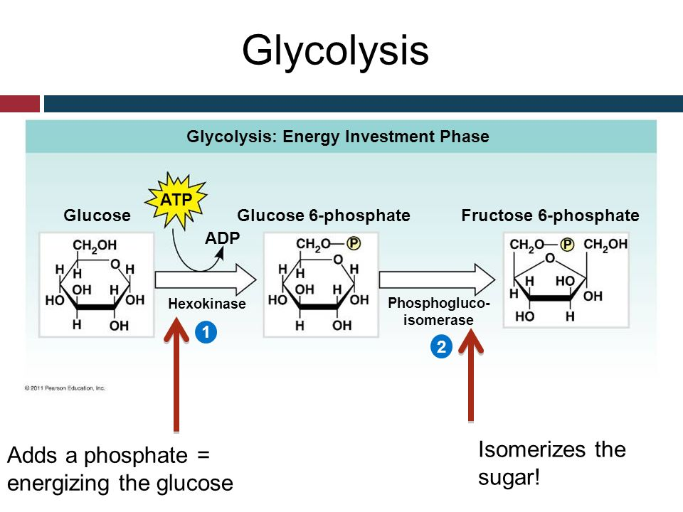 Fructose 6 Phosphate Glycolysis What do you know about...