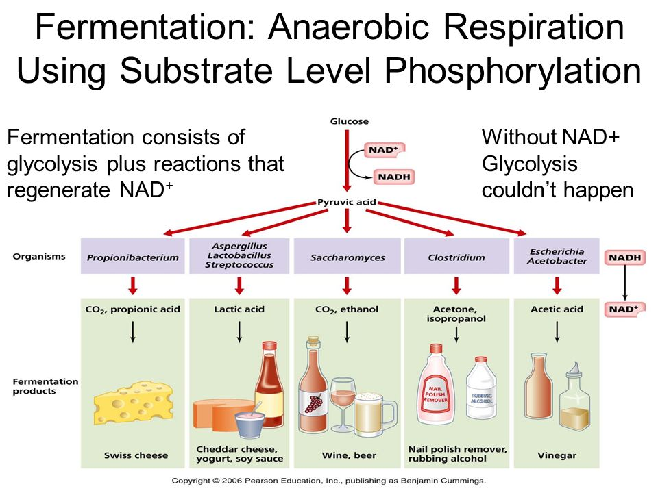 What do you know about Cellular Respiration? - ppt download