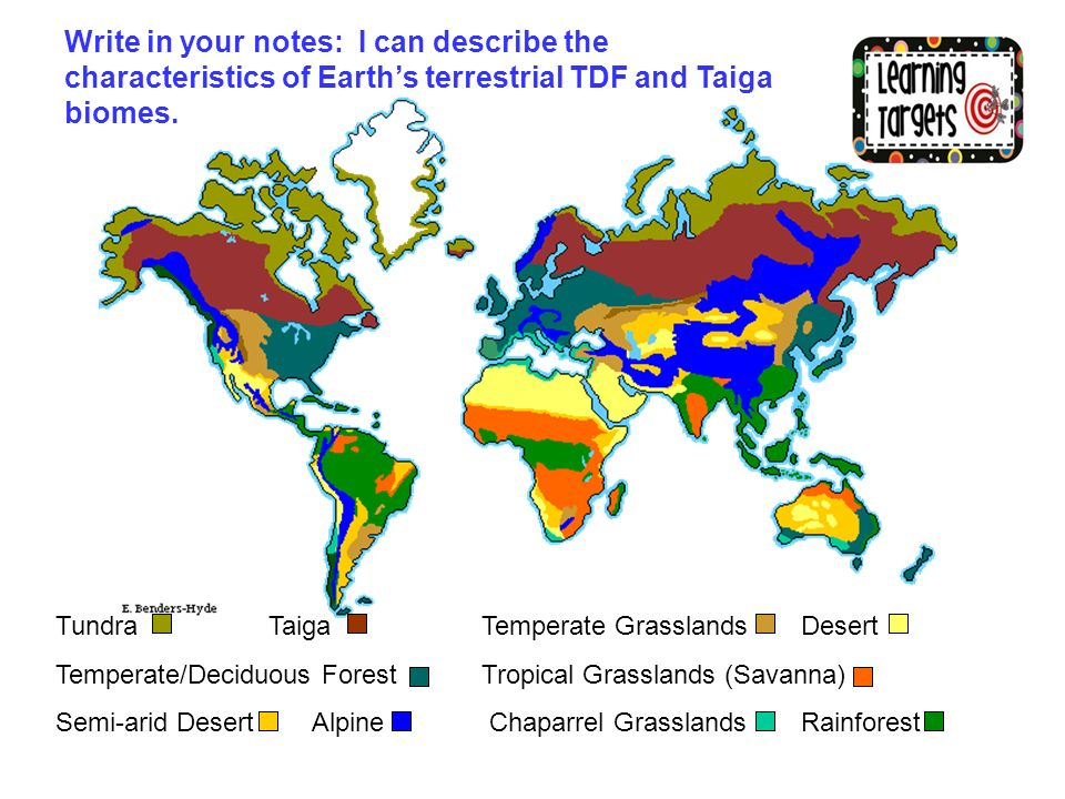 Write in your notes i can describe the characteristics of earths write in your notes i can describe the characteristics of earths terrestrial tdf and taiga gumiabroncs Image collections