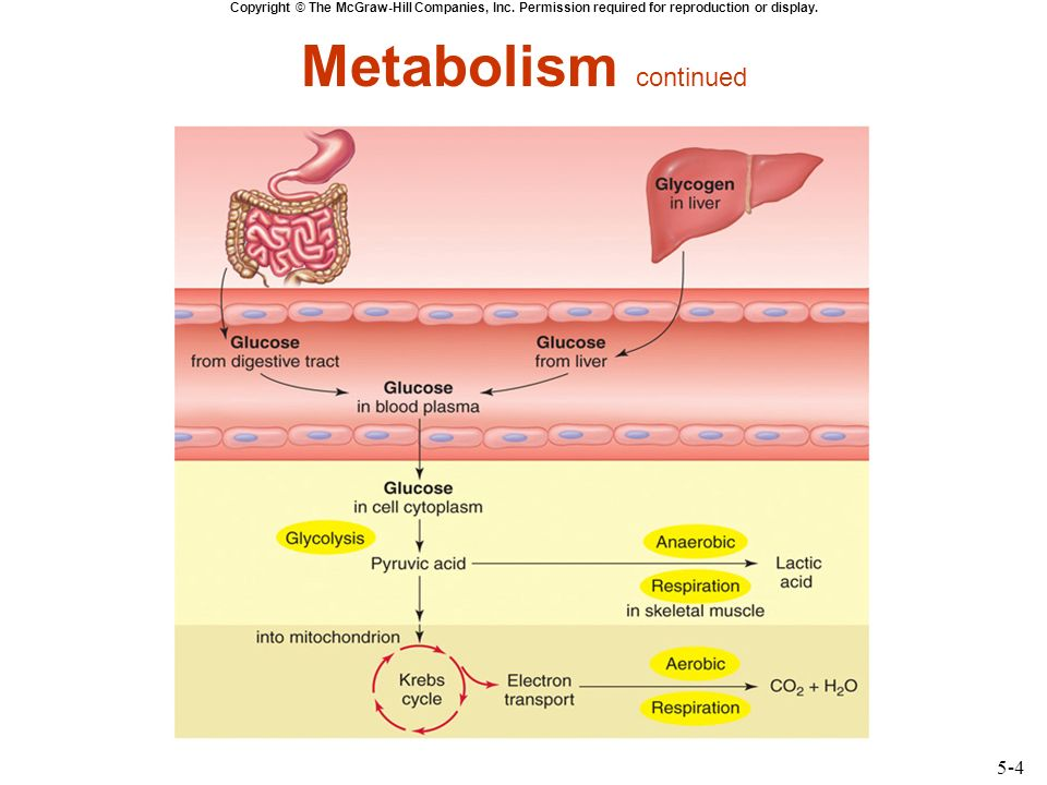chapter 13 energy metabolism Biology (11th edition) answers to chapter 6 - energy and metabolism - review questions - apply 1 including work step by step written by community members like you.