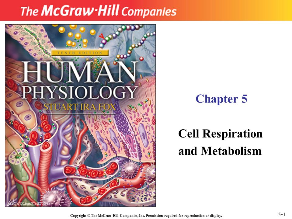 physiology notes cell structure and metabolism