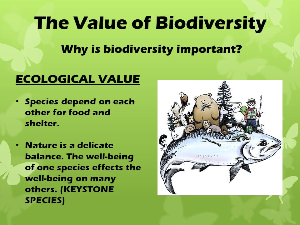 "ecology and biodiversity Ecology and biodiversity ""the basin provides habitat for more than 290 bird, animal and fish species, and more than a thousand different plant species."