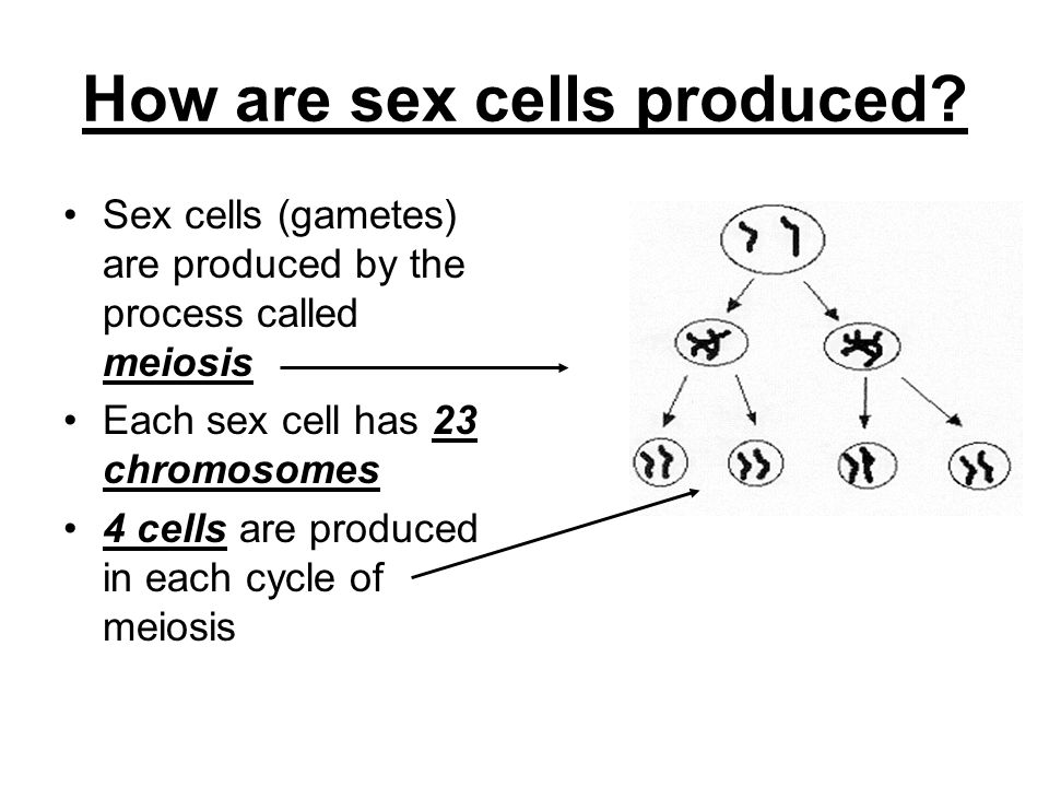 how are sex cells formed