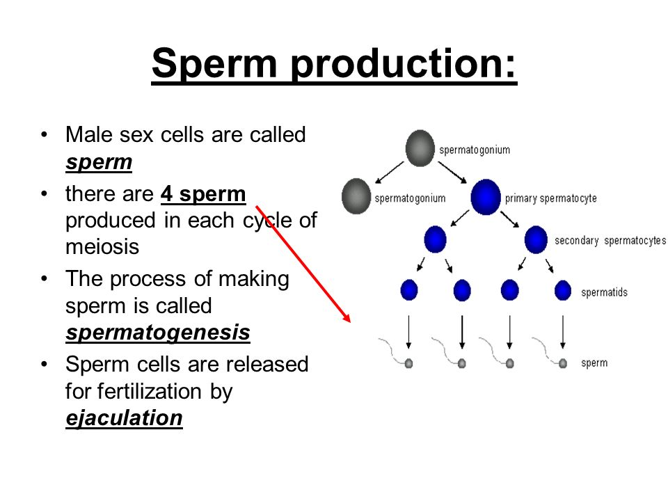 Male Sex Cells Are Called 97