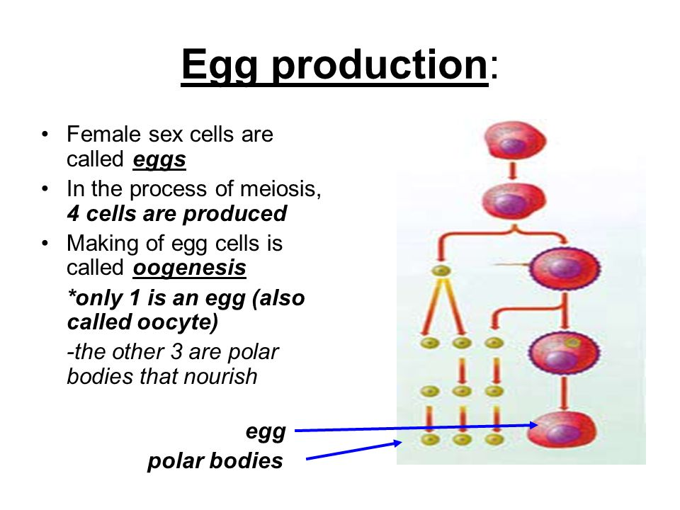 Male Sex Cells Are Called 50