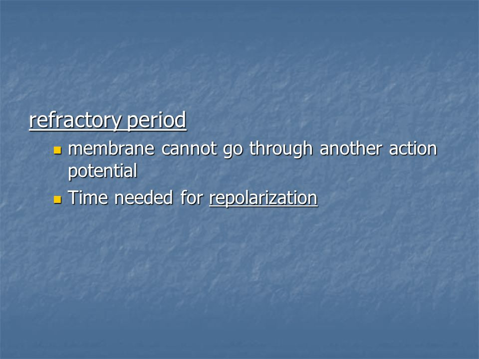refractory period membrane cannot go through another action potential