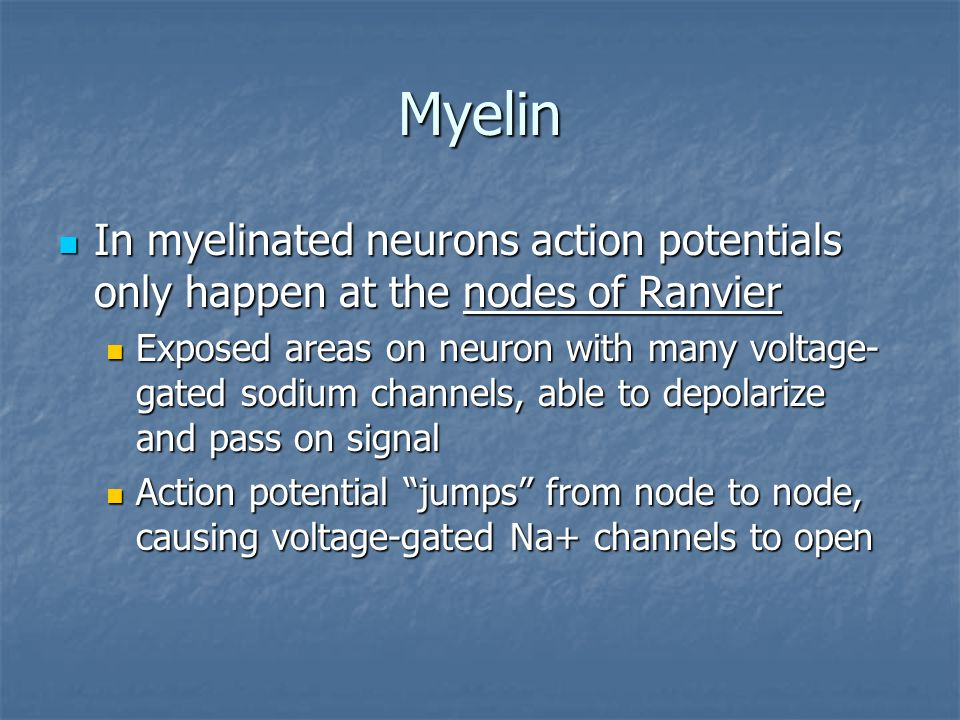 Myelin In myelinated neurons action potentials only happen at the nodes of Ranvier.