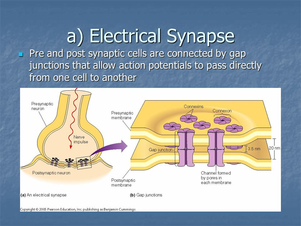 a) Electrical Synapse