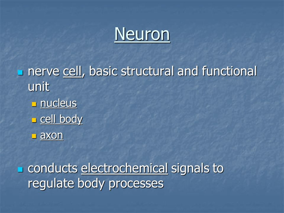 Neuron nerve cell, basic structural and functional unit
